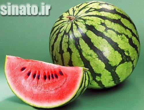 کاربرد اسید هیومیک بر کیفیت و شیرین شدن هندوانه