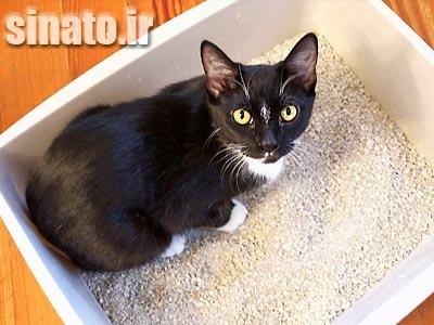 بنتونیت بستر گربه, بنتونیت خاک بستر حیوانات, بنتونیت بستر مرغداری, بنتونیت بستر چیست,
