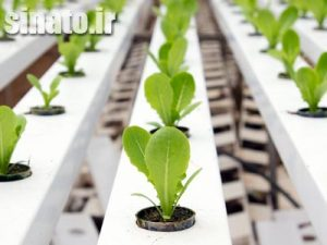 تاثیر اسید هیومیک بر بهبود عملکرد گیاه جو
