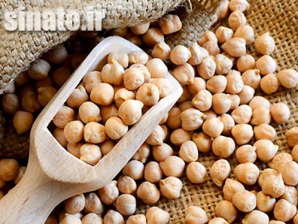 تاثیر اسید هیومیک بر گیاه نخود