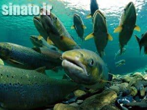 نقش آهک در استخرهای پرورش ماهی