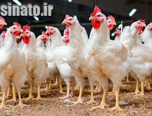 اسید هیومیک و تاثیر فوق العاده آن در پرورش مرغ گوشتی