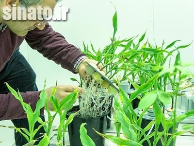بنتونیت در کشاورزی